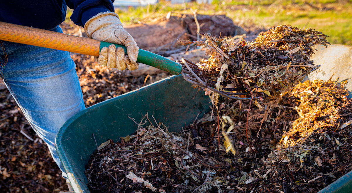 Using a pitchfork to add wood chips and shredded brush to a no-dig raised bed for permaculture gardening