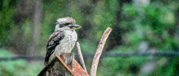 Bird in the rain on birdhouse