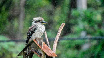 Bird in the rain on birdhouse