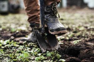 Man's boot on shovel to dig through soil.