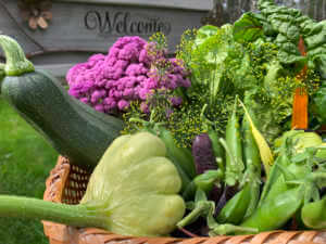 Basket of homegrown fresh produce picked from organic garden