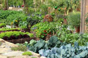 Herbs and vegetables garden