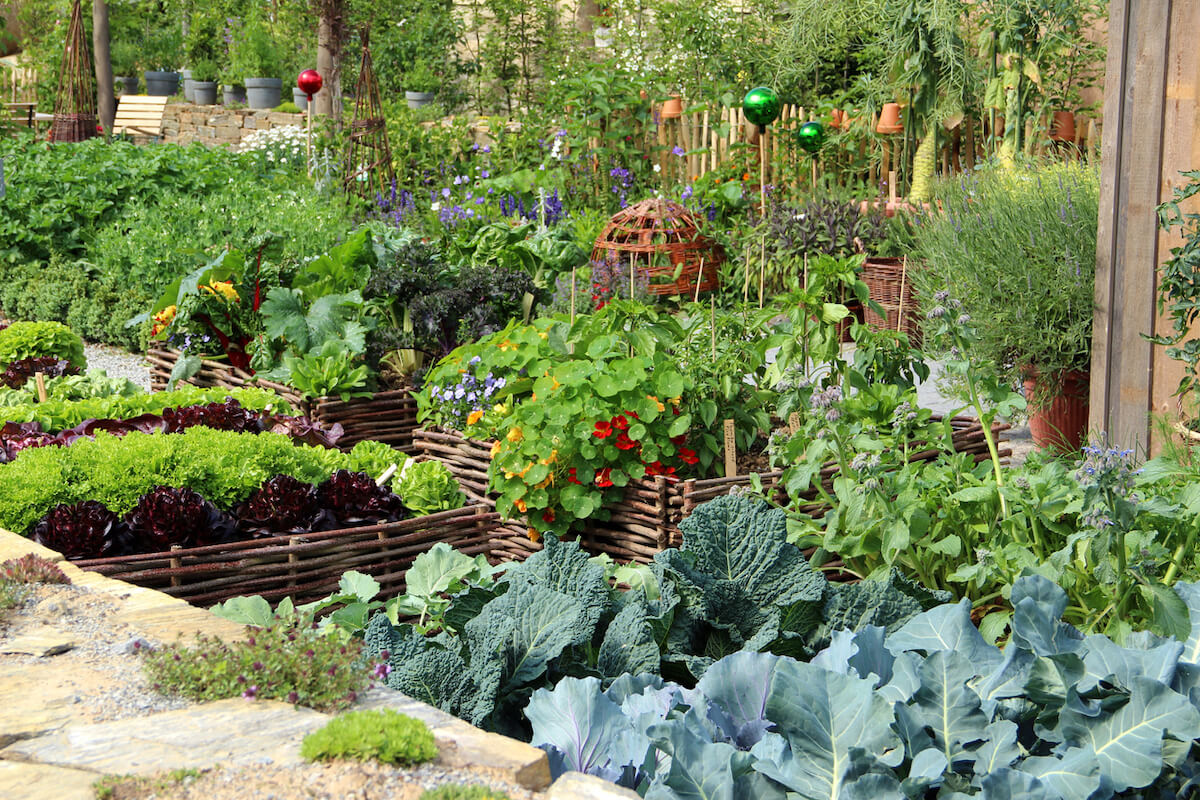 Herbs and vegetables garden