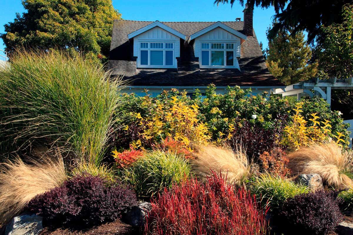 ornamental grasses garden outside fence.