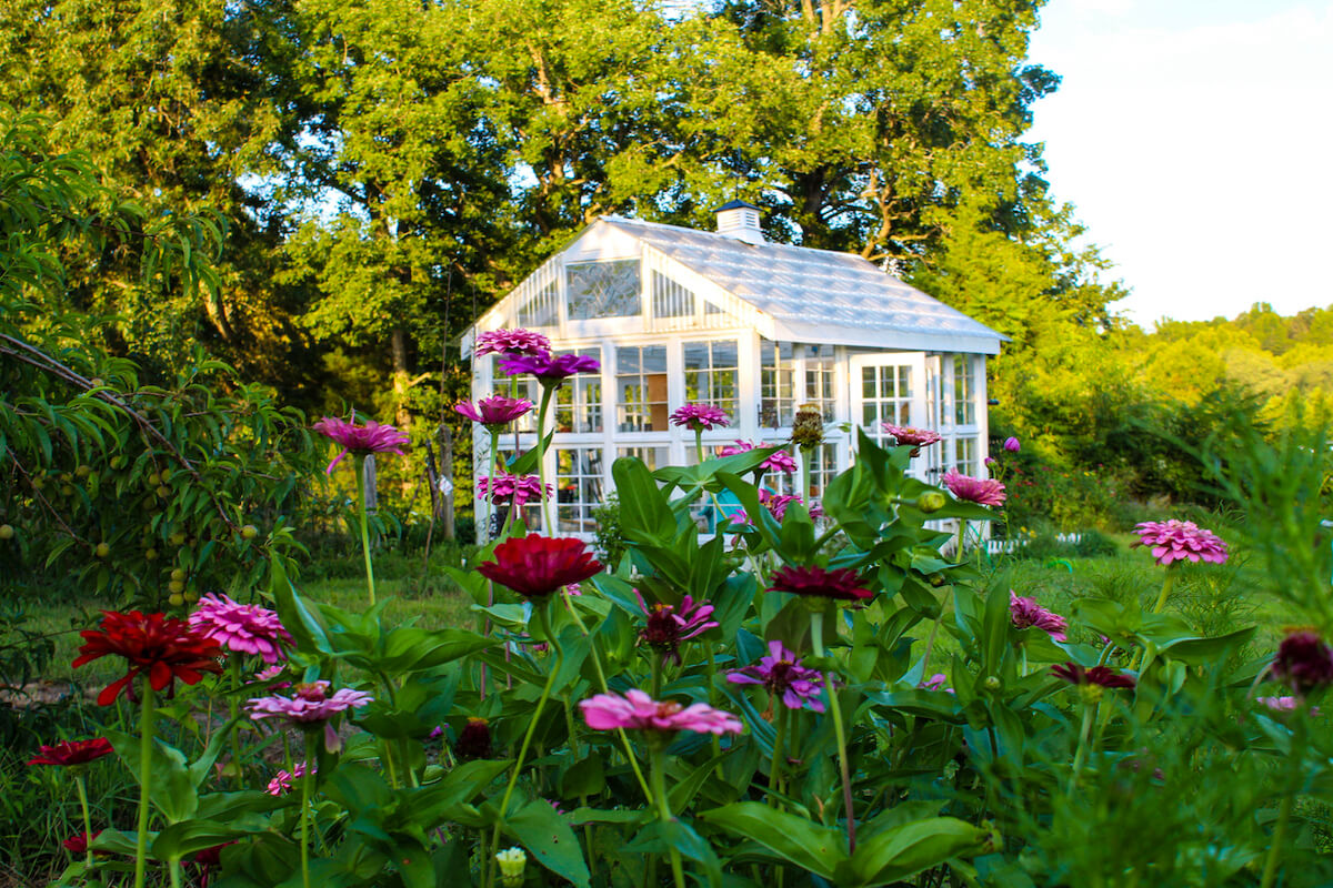 Gorgeous greenhouse in a garden of zinnias