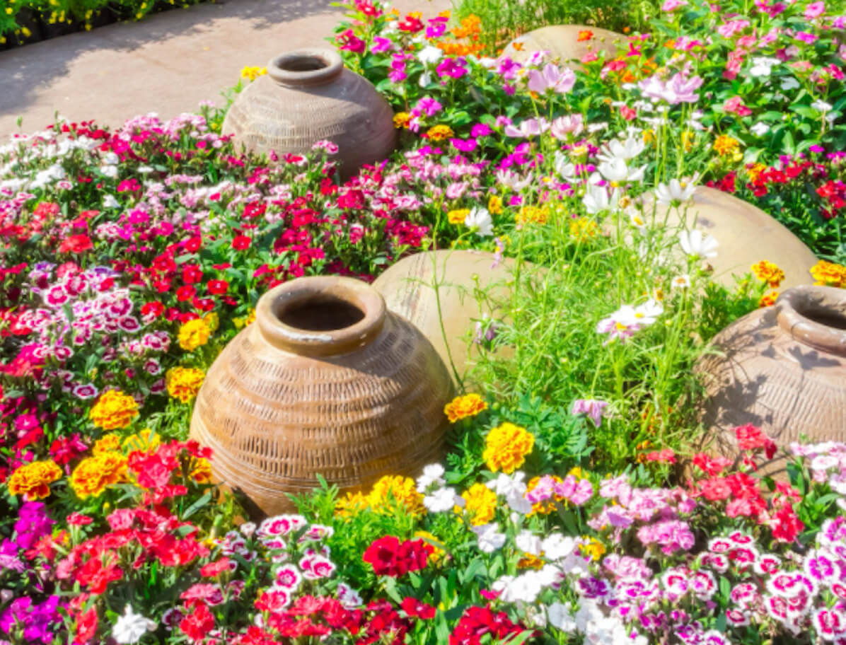 Close up of a flower garden with clay pots.