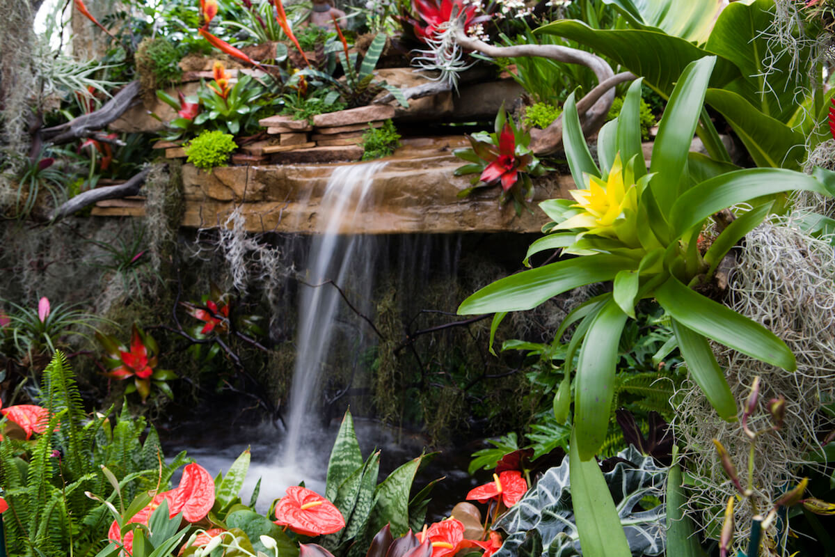 Small waterfall surrounded by red and yellow tropical flowers