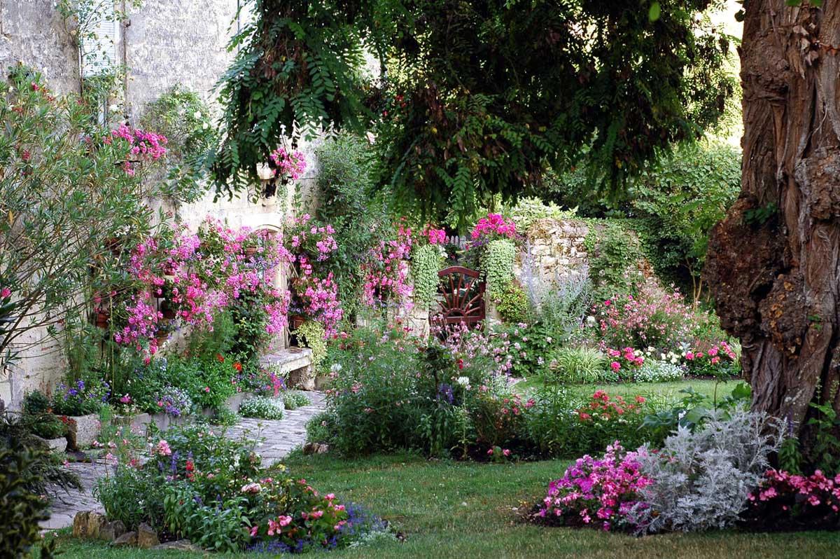A summer garden with pink flowers