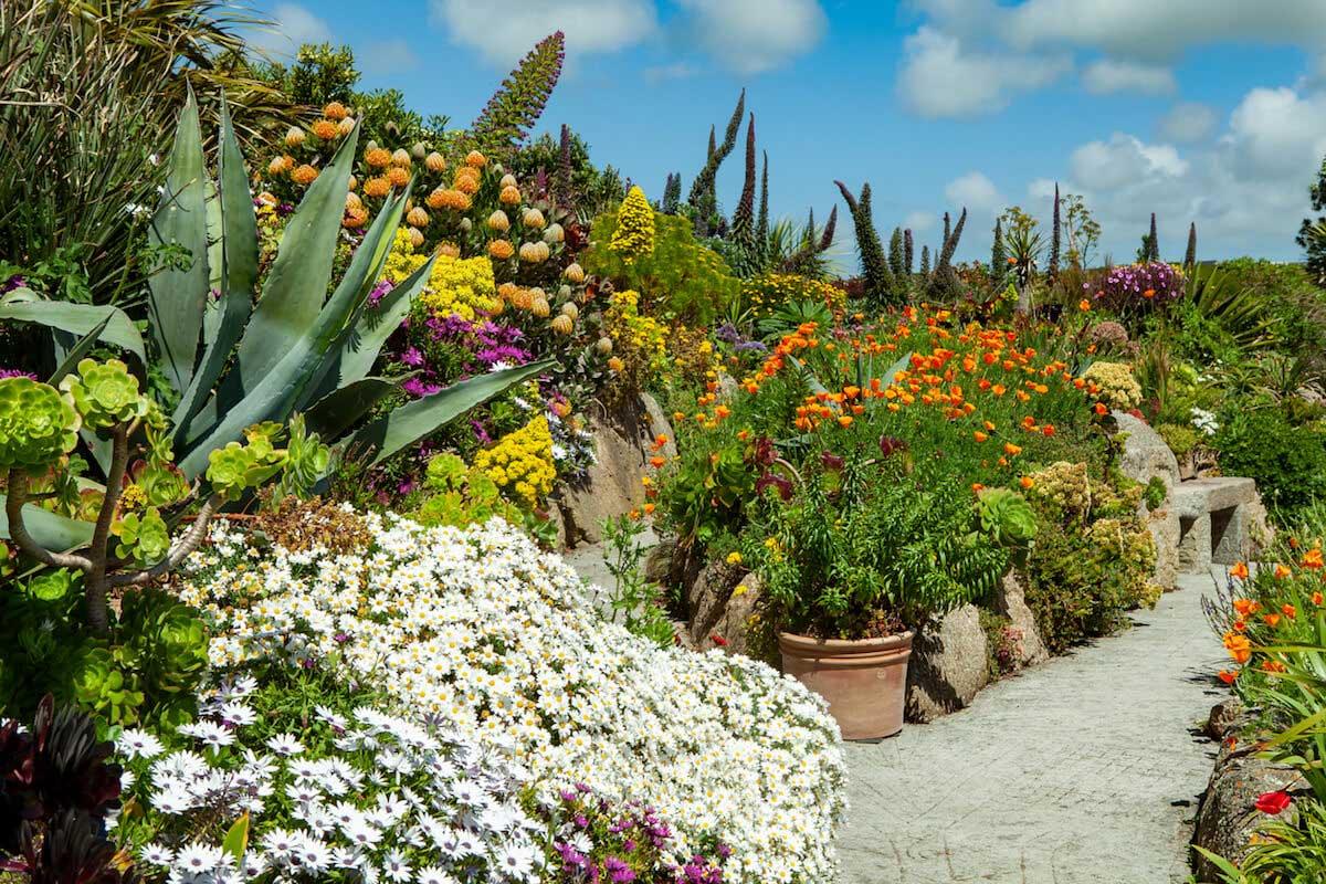 Alpine rockery plants and flowers