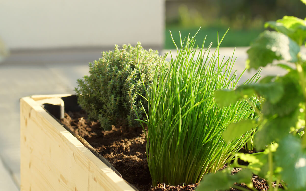 Handmade raised bed with chives and other herbs
