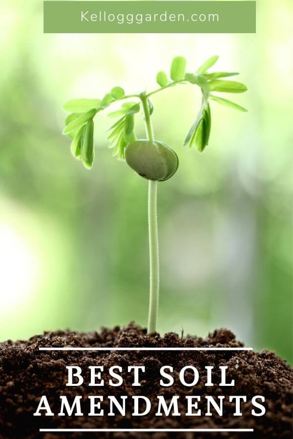 A plant sprouting from soil