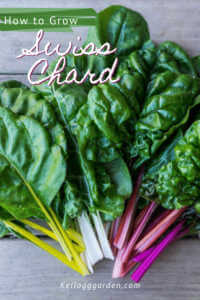 Swiss chard on top of wooden table.