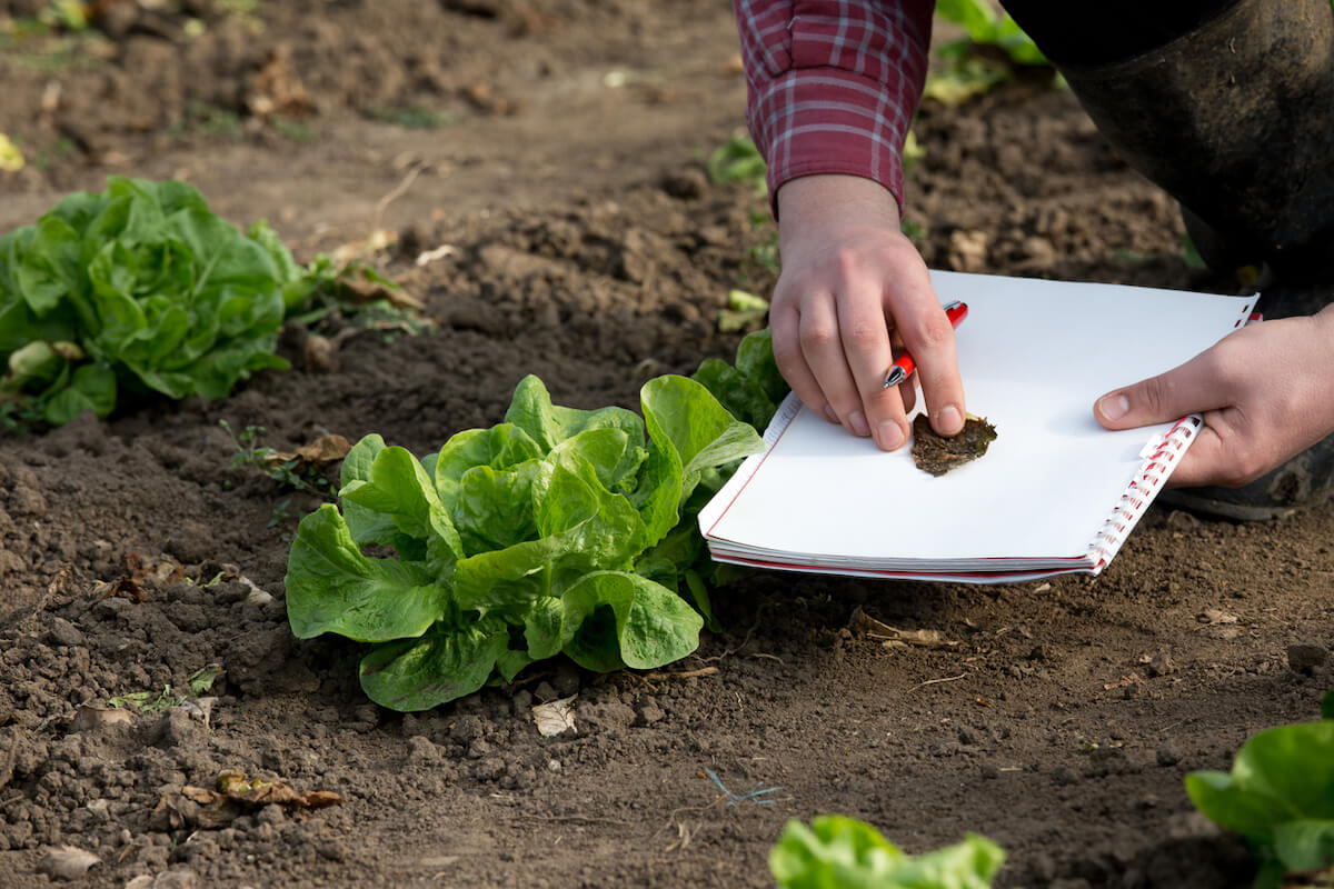 Farmer with notebook inspecting products in garden.