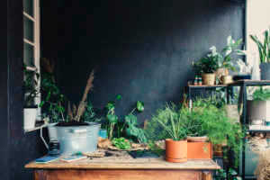 Gardener's Workspace: a Centrally Placed Table Surrounded with Plants and Gardening Tools