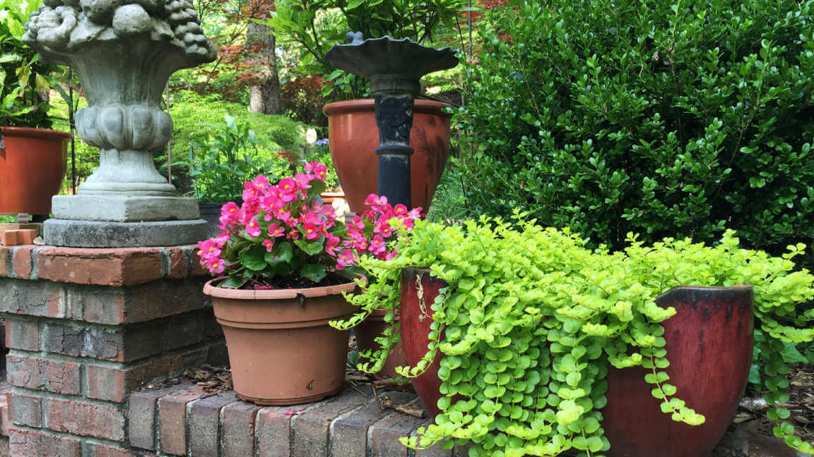 Backyard Patio Container Garden with Plants and Flowers