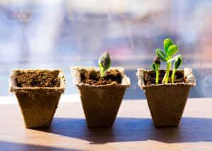 Three growing seedlings