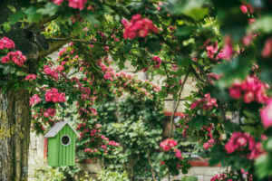 green bird house in a tree surrounded by pink flowers
