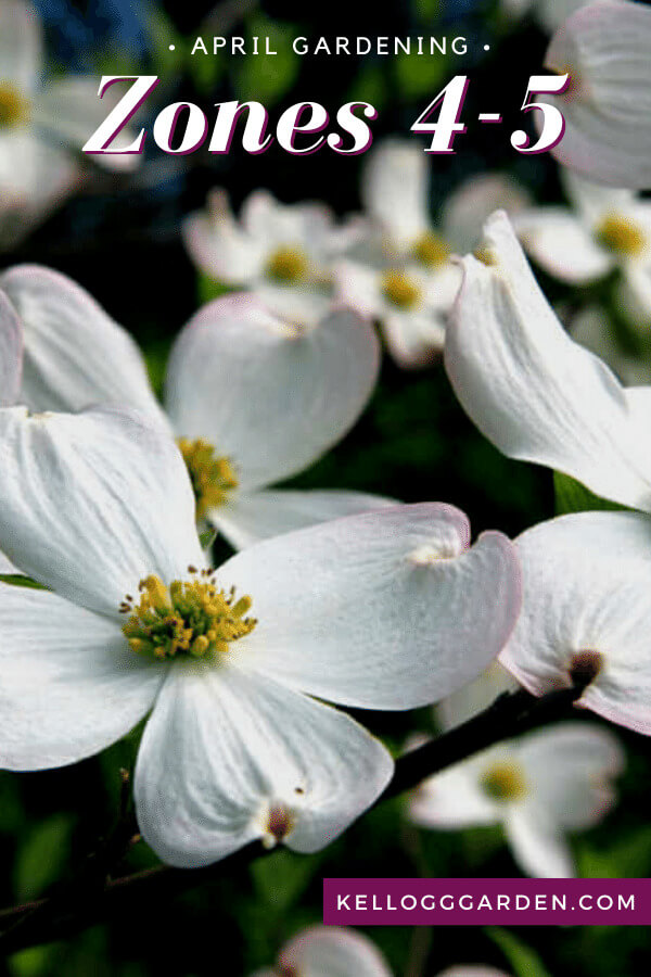 Close up of white flowers in garden.