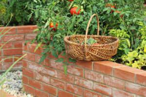 Basket of vegetables in the garden