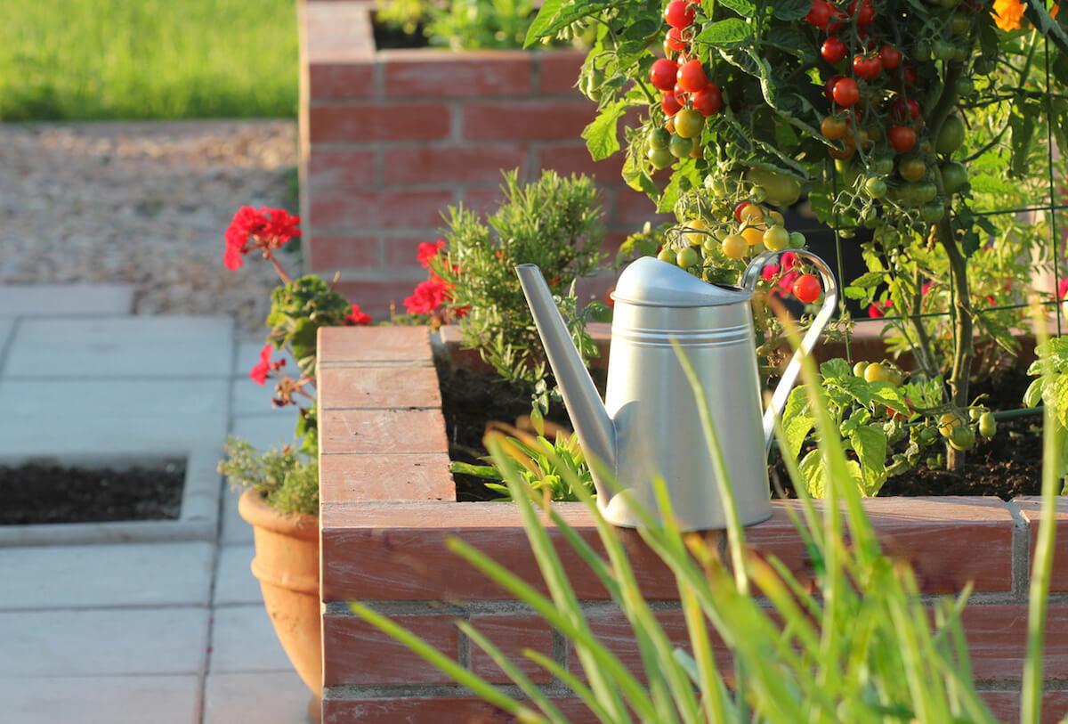 Watering can in beautiful vegetable garden