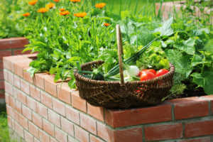Basket of garden harvest sitting on brick raised bed