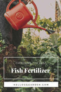 farmer holding watering can and watering vegetable garden