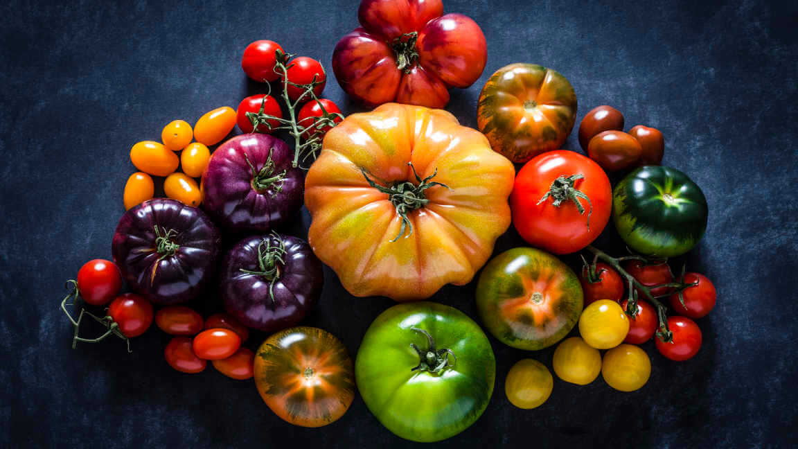 Top view of a dark background filled with a large variety of multi colored ripe tomatoes.