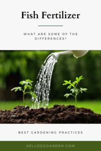 tilted watering can watering seedlings in soil