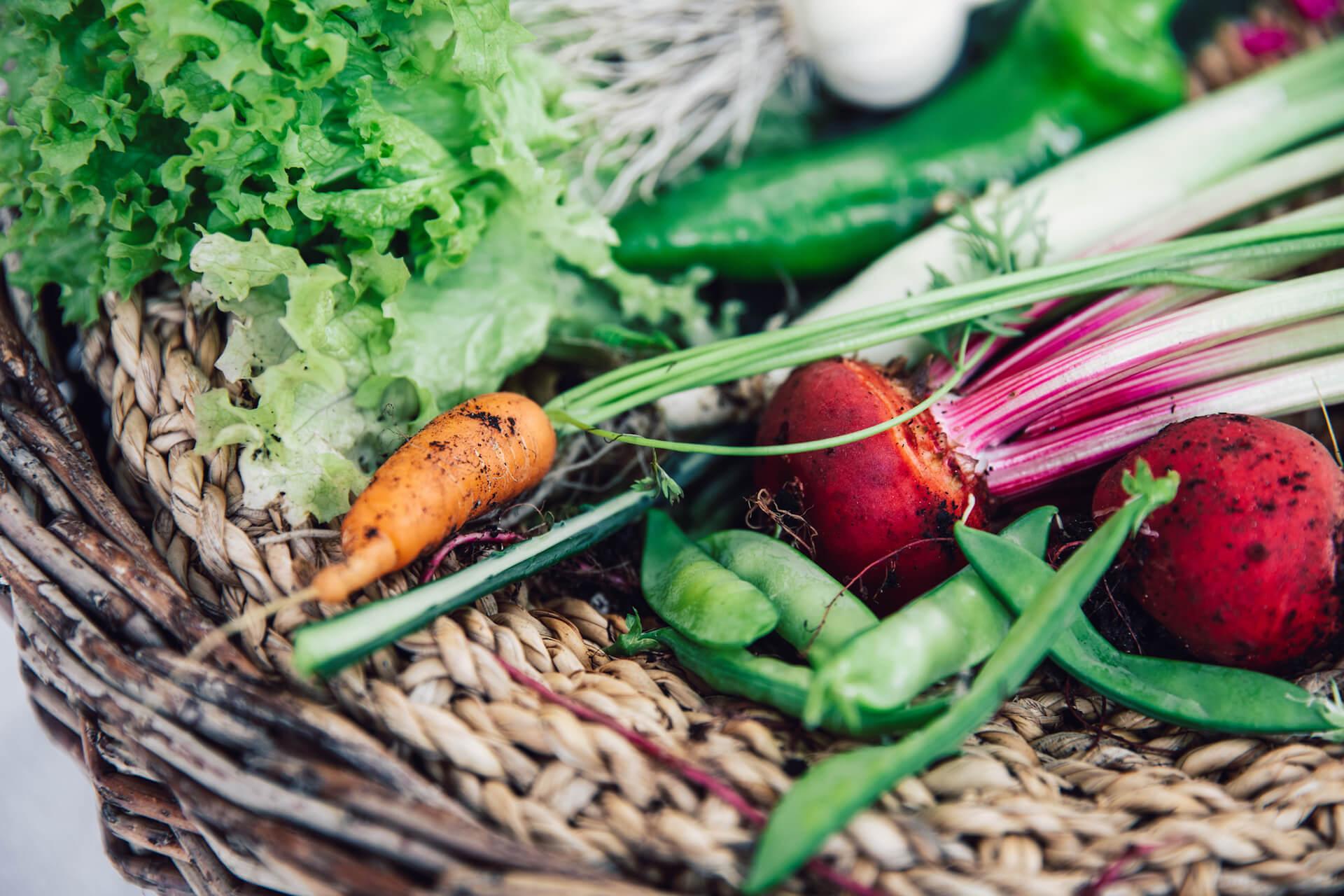 Basket full of freshly harvested vegetables