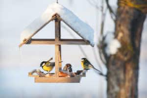 Birds in the snowy winter bird feeder