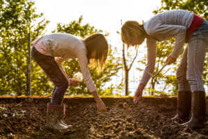 Mother and Daughter Sowing Green Peas Seeds in Spring Vegetable Garden