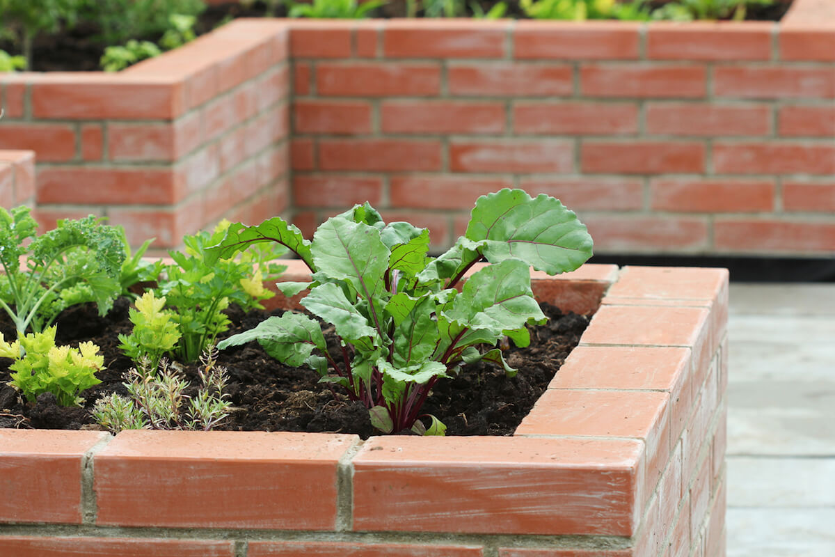 Plants and vegetables growing in raised garden bed