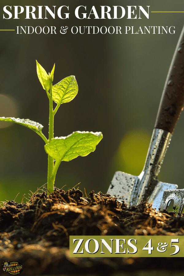 Seedling growing in soil with a garden trowel.