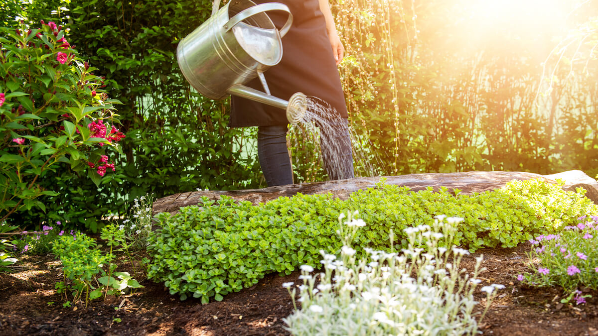woman watering flower bed using watering can.