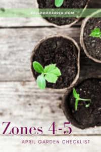seedlings in small pots.