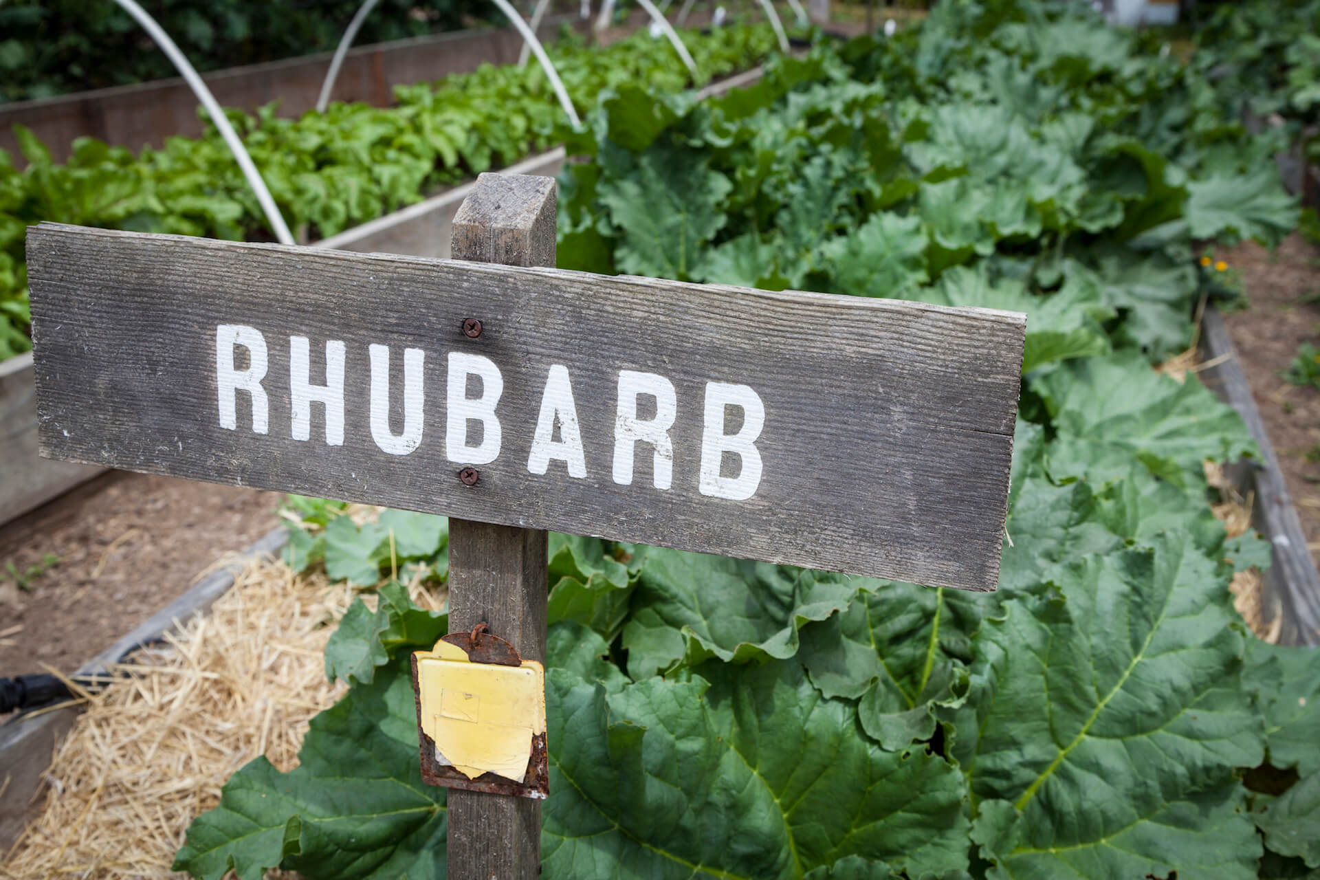 Growing Vegetables in small communal garden