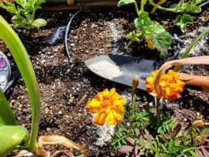 flower garden with trowel in soil