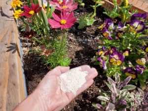 hand full of fertilizer over flower raised bed
