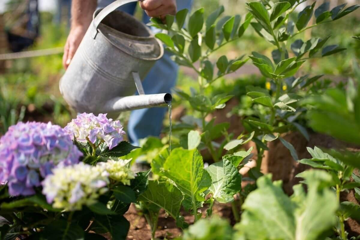 Metal watering can in flower garden