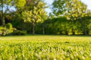 well kept lawn in summer.