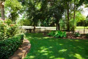 Backyard garden with fresh plants and grass