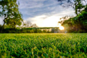 Close up of fresh cut lawn and sunset