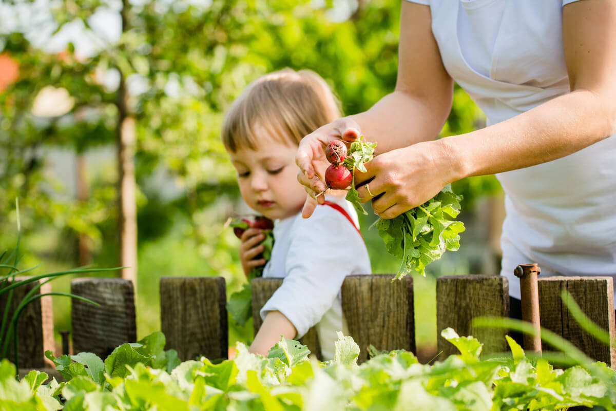 Mother and child picking radishes