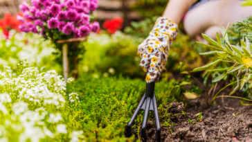 Hand planting in flower garden