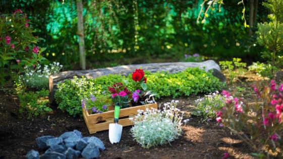 Gardening. Crate Full of Gorgeous Plants and Garden Tools Ready for Planting In Sunny Garden.