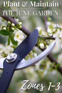 gardener pruning blooming branches
