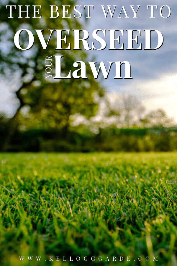 close up of lawn grass