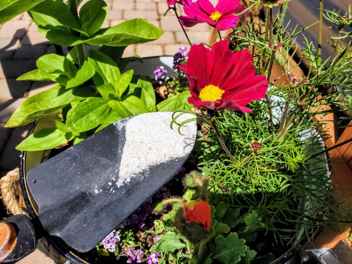 gardening trowel with fertilizer in flower pot