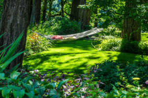 Backyard garden with fresh plants and grass and a hammock