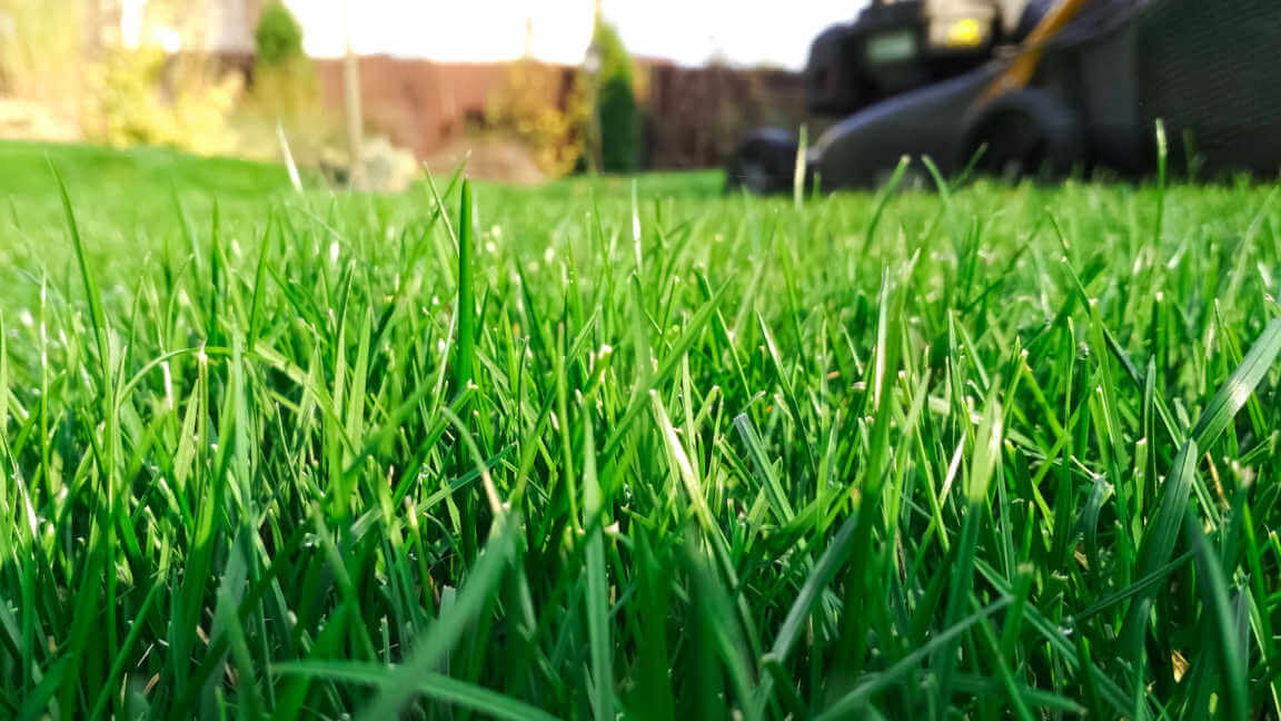 Sunny lawn mowing in the garden.